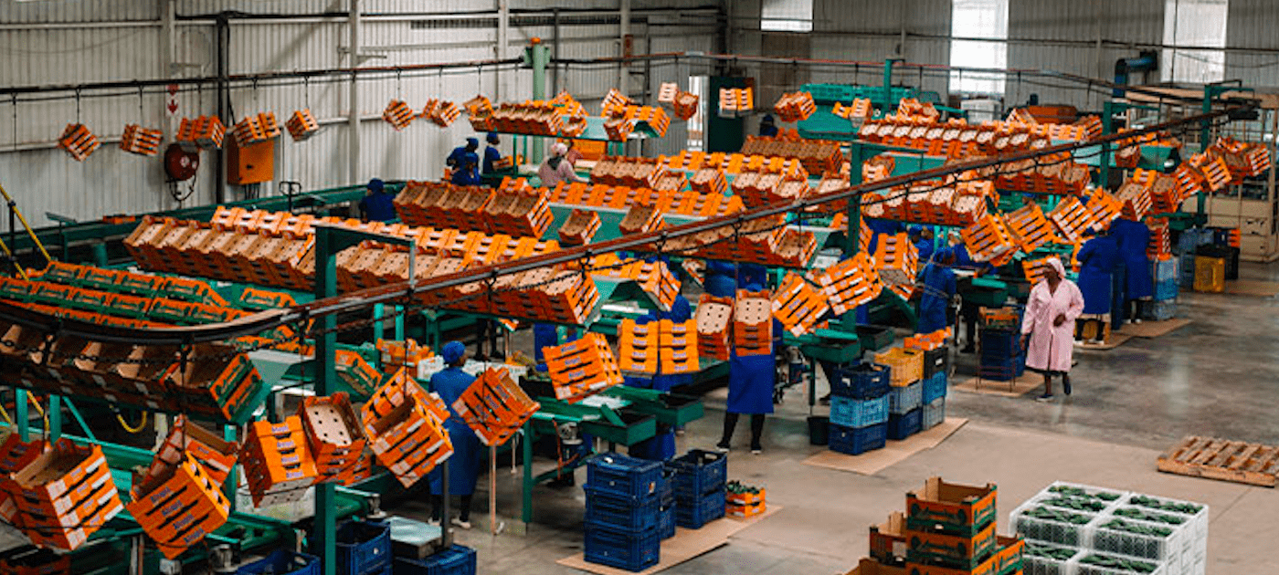 Case Study: South African fruit packing company implements CaaS