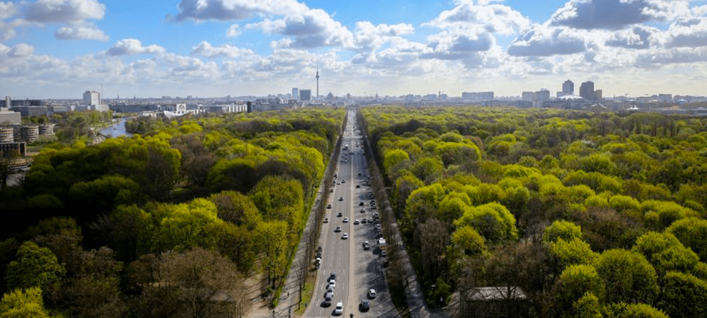 Who looks after city trees? Why we need them more than ever
